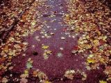 october path