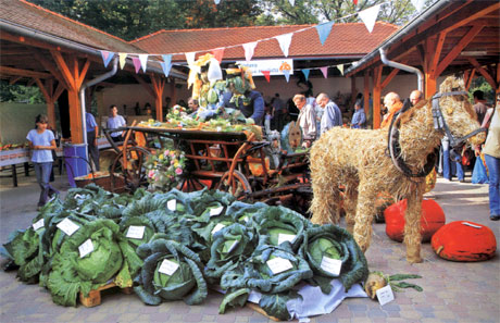 Cabbage days in Stupava - Photography from the book Zahorie