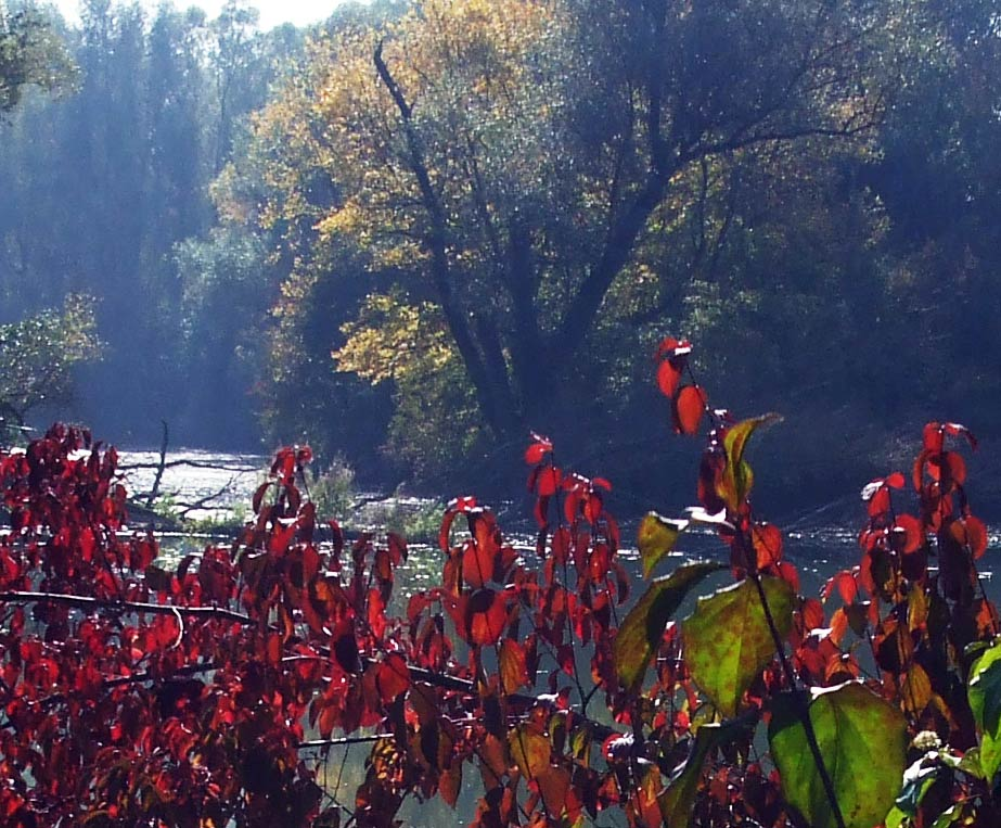 Fall in the Danube River Branches
