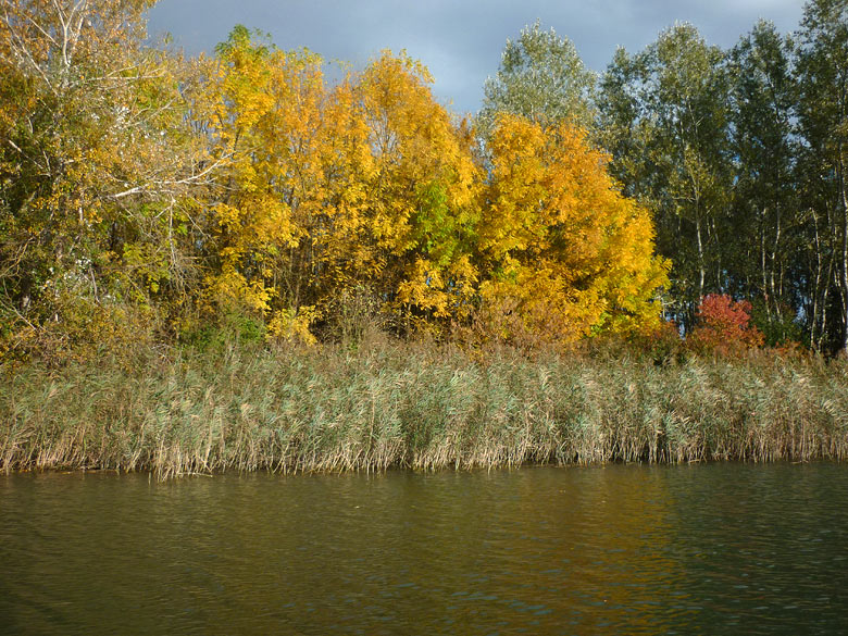 Fall in the Danube River branches, 2013
