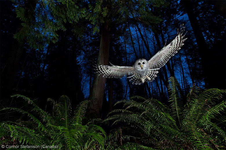 Wildlife photographer: The flight path